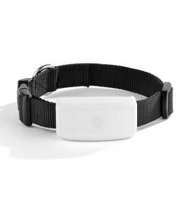 Collare Localizzatore Portatile Gps Tracker per Animali Cane Cani WiFi